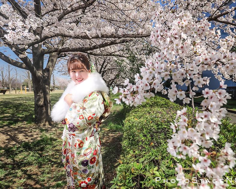 桜の下で成人式の前撮り